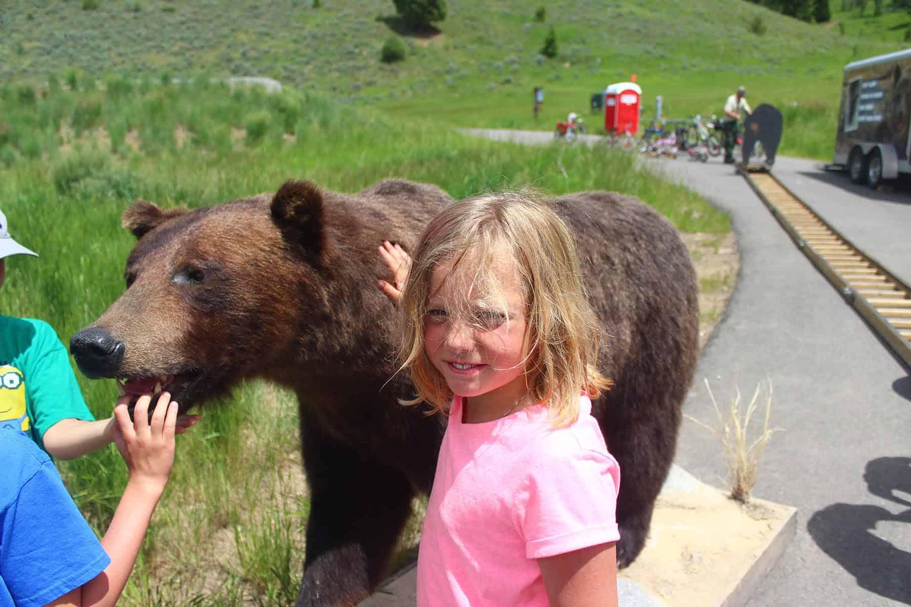 Bear Guest