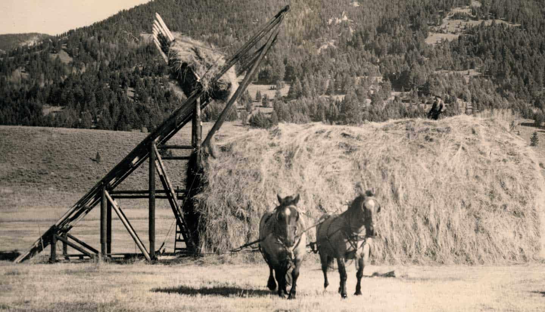 Beaverslide haying